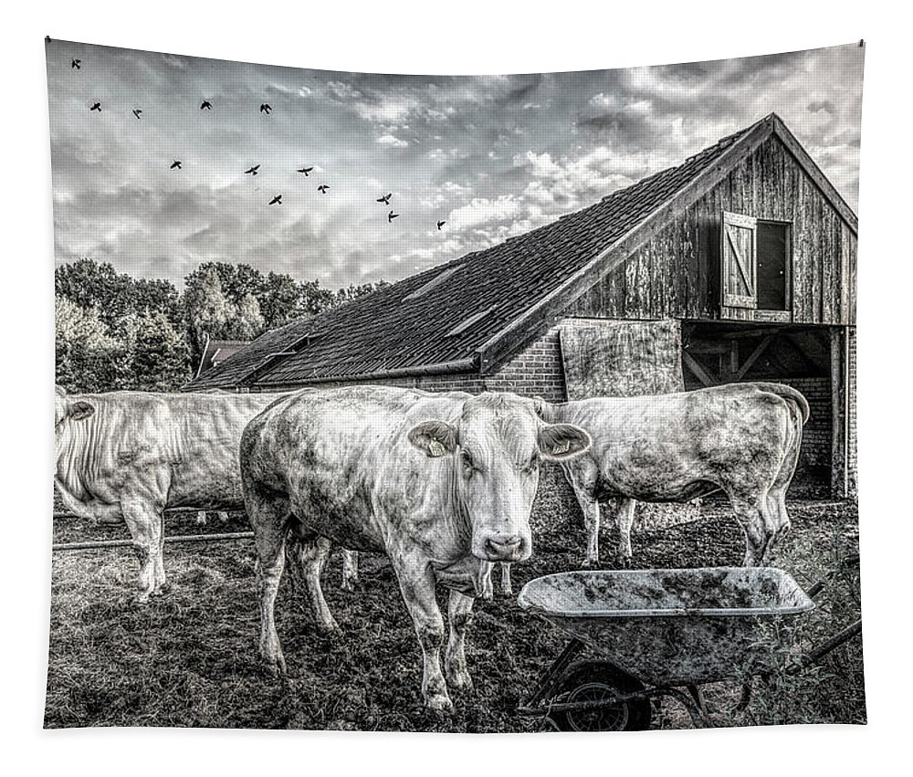 Animals Tapestry featuring the photograph The Cows Came Home Black And White by Debra and Dave Vanderlaan