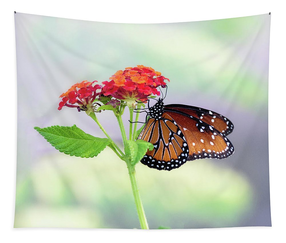 Queen Butterfly Tapestry featuring the photograph The Queen Of Butterflies by Saija Lehtonen