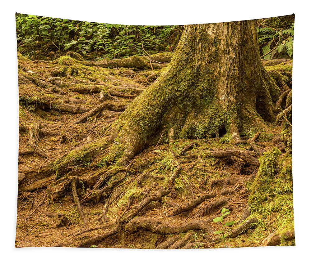 America Tapestry featuring the photograph Trail Of Roots by Marv Vandehey