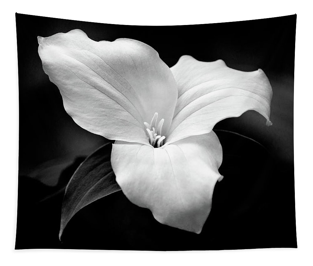 Black And White Tapestry featuring the photograph Trillium Flower Black and White by Christina Rollo