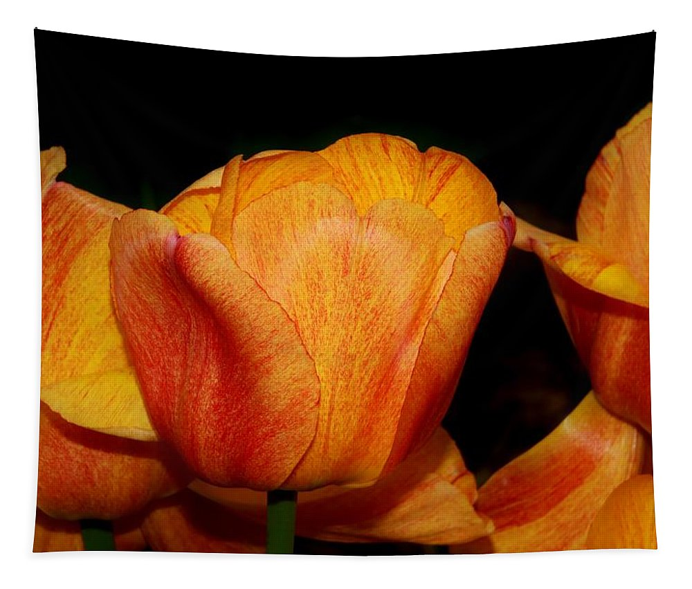 Karen Silvestri Tapestry featuring the photograph Tulips On A Black Background by Karen Silvestri