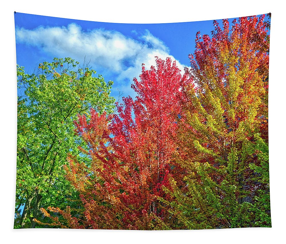 Finger Lakes Tapestry featuring the photograph Vibrant Autumn Hues At Cornell University - Ithaca, New York by Lynn Bauer