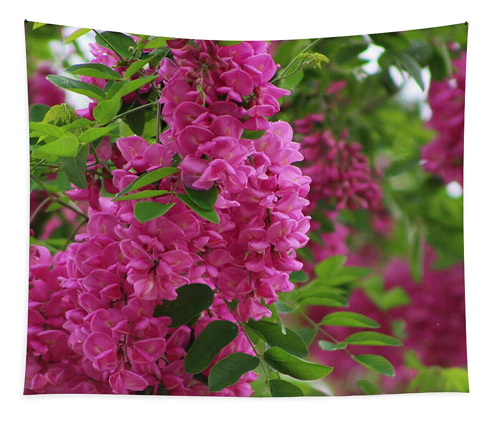 Vin Rouge Tapestry featuring the photograph Vin Rouge Flowers on Locust Tree in Rain by Colleen Cornelius