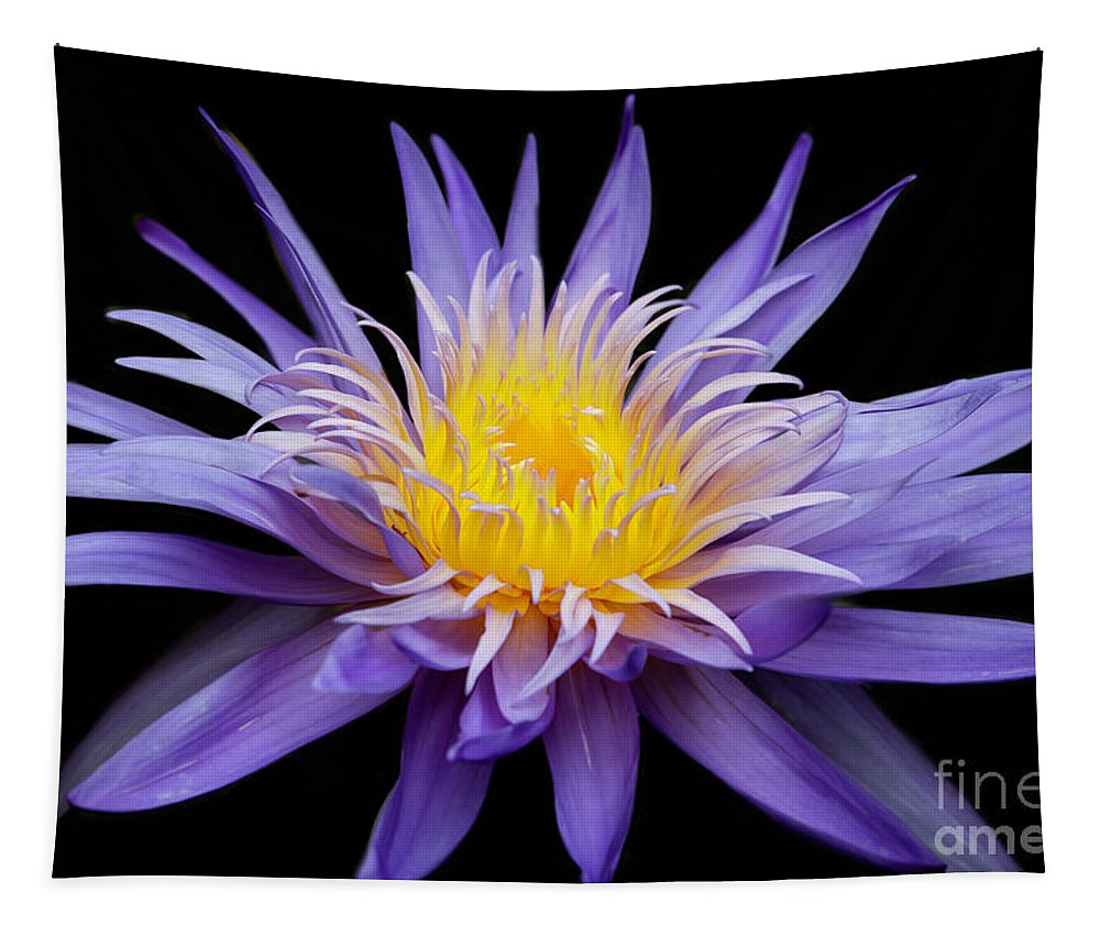 Spring Tapestry featuring the photograph Water Lily Spiky And Purple by Sabrina L Ryan