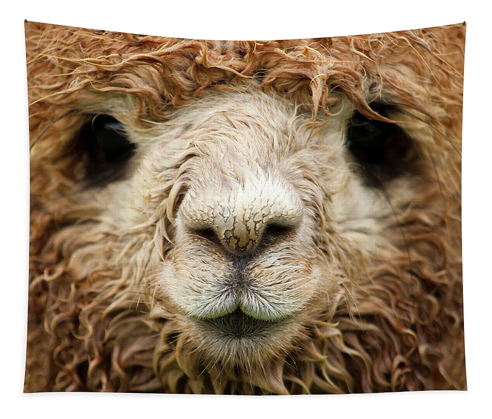 Alpaca Tapestry featuring the photograph Waterlogged by Bari Rhys