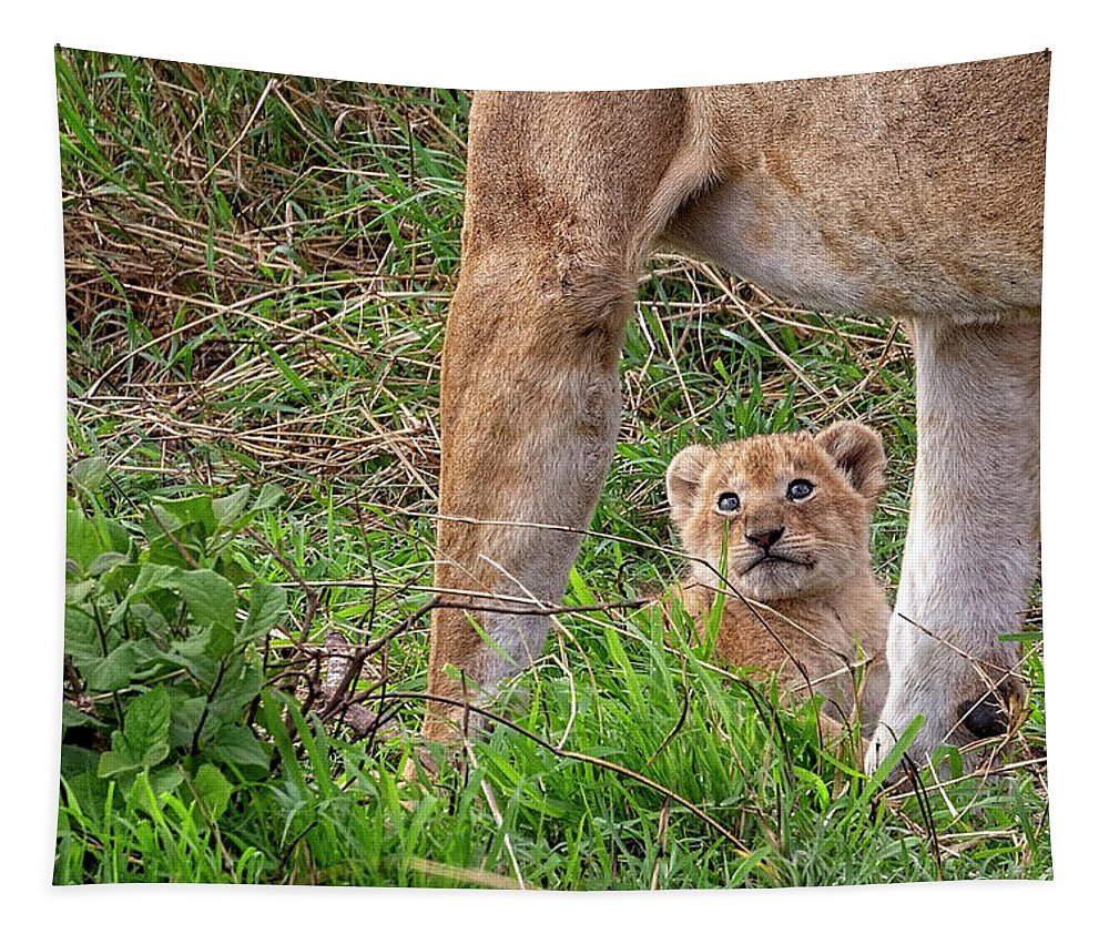 Lion Tapestry featuring the photograph What Could Be Cuter Than A Baby Lion Cub? by Kay Brewer