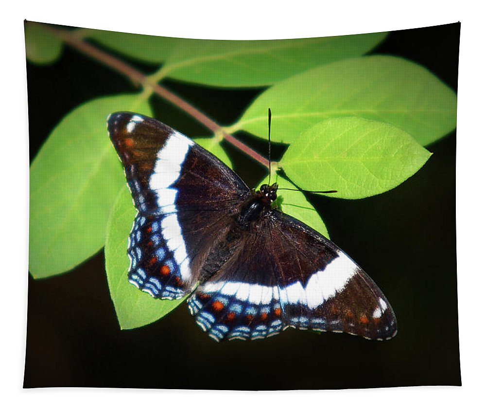 White Admiral Butterfly Tapestry featuring the photograph White Admiral Butterfly by Christina Rollo