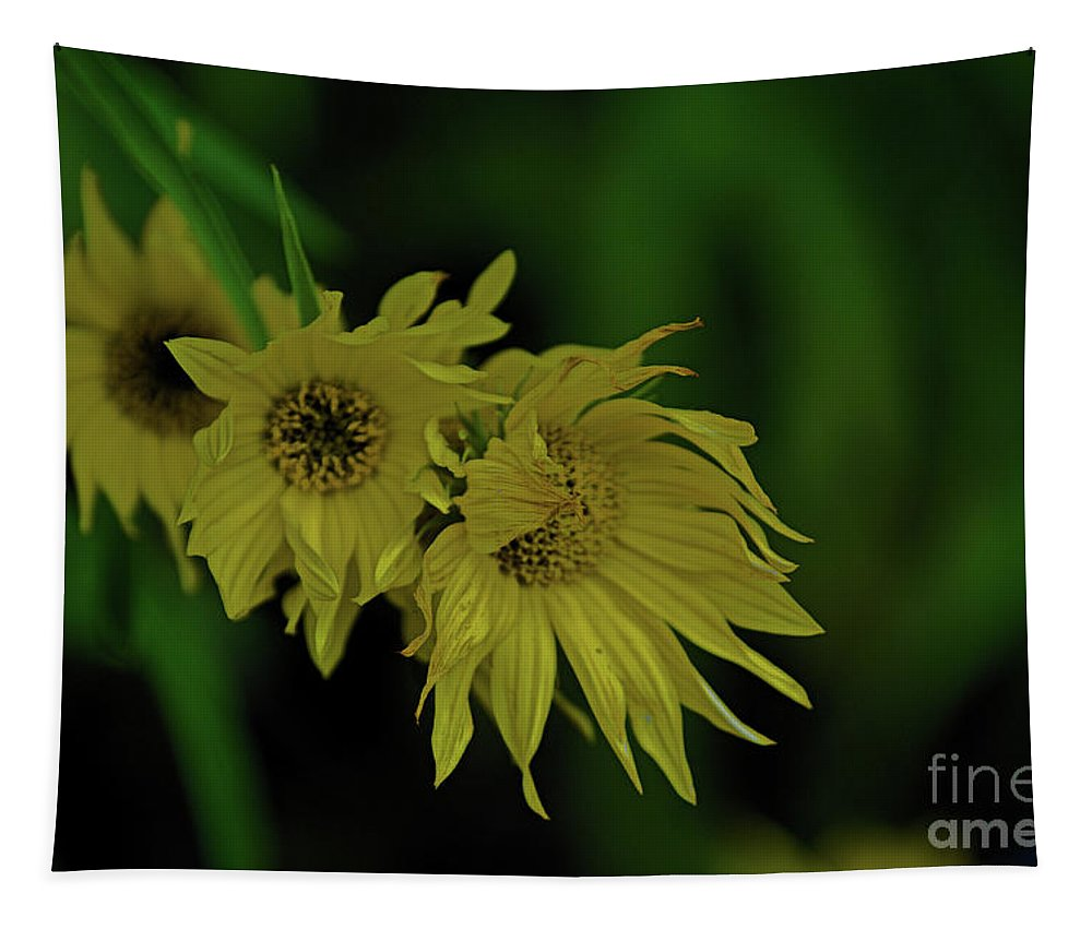 Landscape Tapestry featuring the photograph Wild Sunflowers In The Wind by Darryl Treon