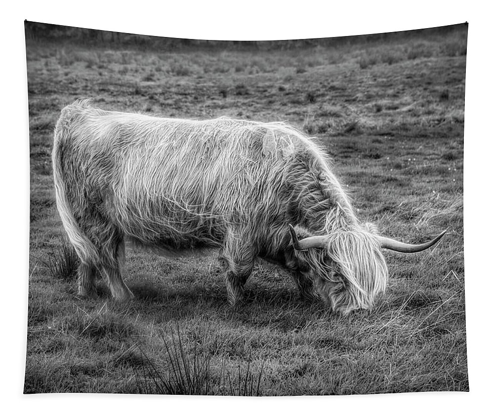 Animals Tapestry featuring the photograph Windblown In Scotland Black And White by Debra and Dave Vanderlaan