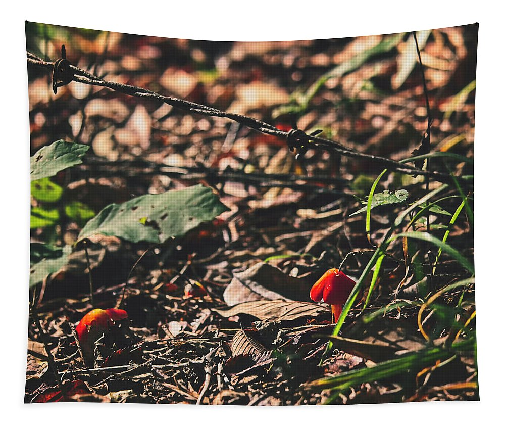Mushroom Tapestry featuring the photograph Witch's Hat Mushrooms by Laura Vilandre