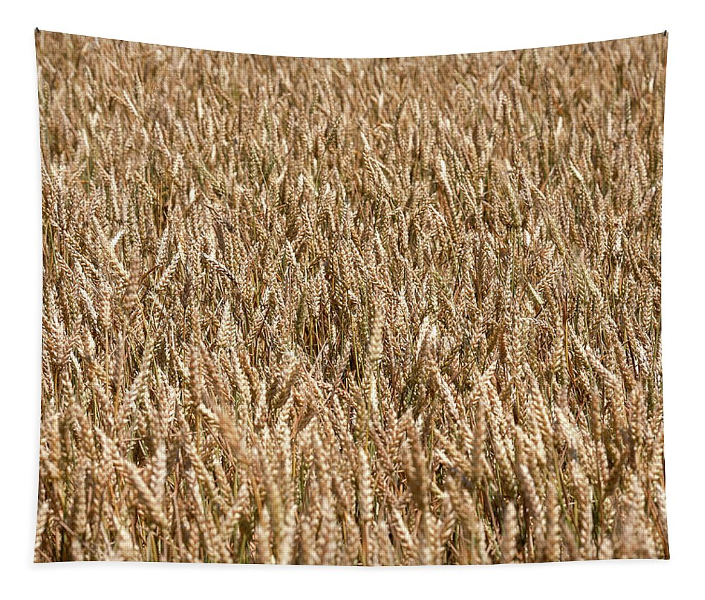 Field Tapestry featuring the photograph Wonderful Wheat by Todd Klassy