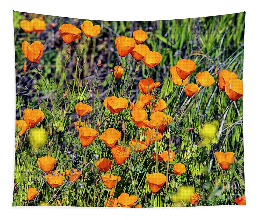 Yellow Poppies Of California Tapestry featuring the photograph Yellow Poppies Of California by Mae Wertz