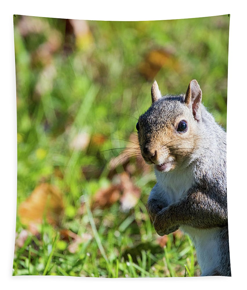 Your Friendly Neighborhood Squirrel Tapestry featuring the photograph Your Friendly Neighborhood Squirrel by Karol Livote