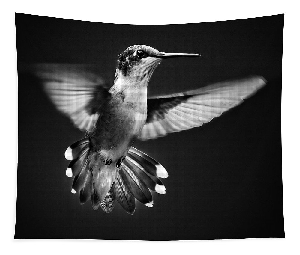 Hummingbird Tapestry featuring the photograph Fantail Hummingbird by Christina Rollo