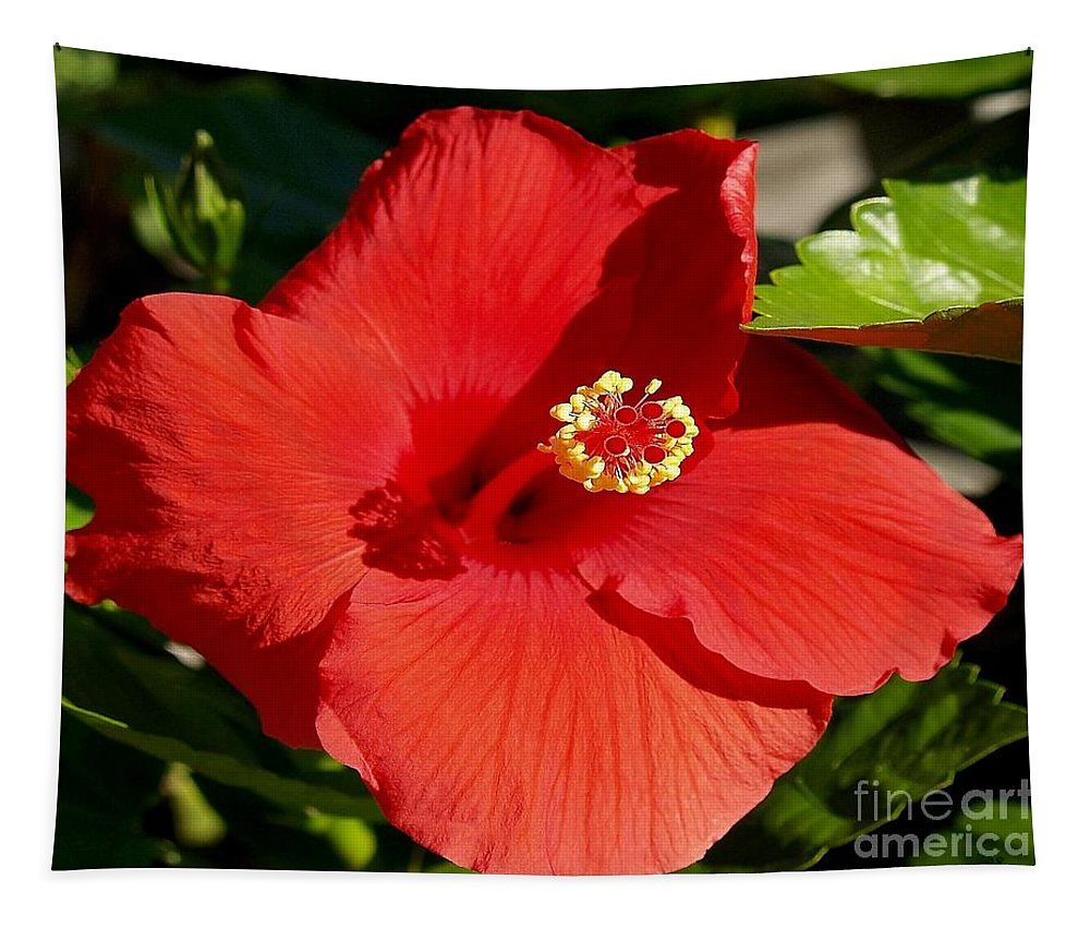 Fine Art Photography Tapestry featuring the photograph Leila by Patricia Griffin Brett