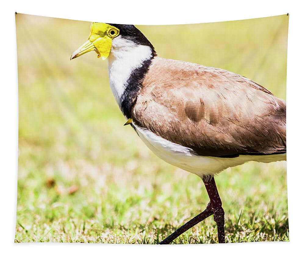 Plover Tapestry featuring the photograph Plover by Jorgo Photography - Wall Art Gallery