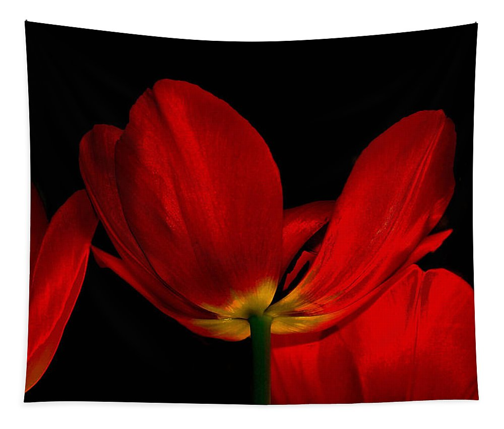 Flowers Tapestry featuring the photograph Red Silk by Linda Sannuti