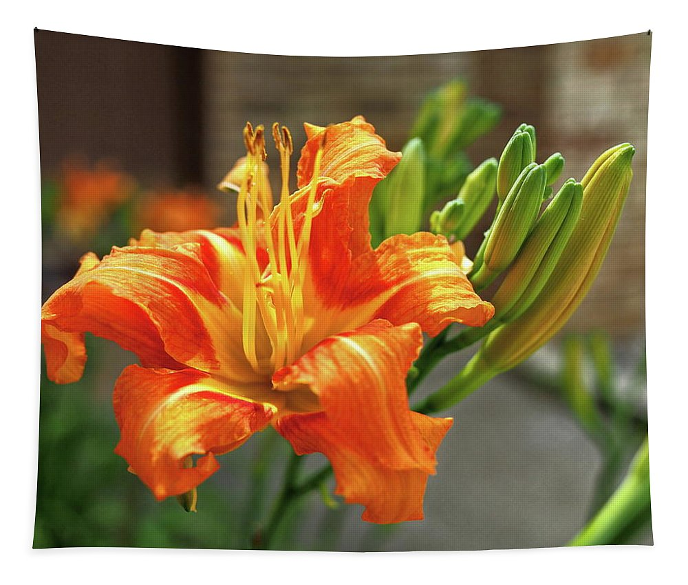 Orange Tapestry featuring the photograph Spring Flower 14 by C Winslow Shafer