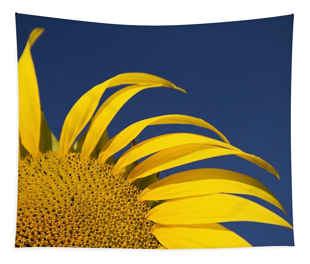 3scape Tapestry featuring the photograph Sunflower by Adam Romanowicz