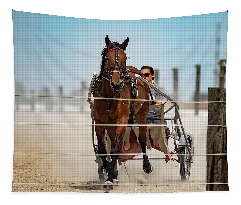 Country Tapestry featuring the photograph Trotter Training by Scott Smith