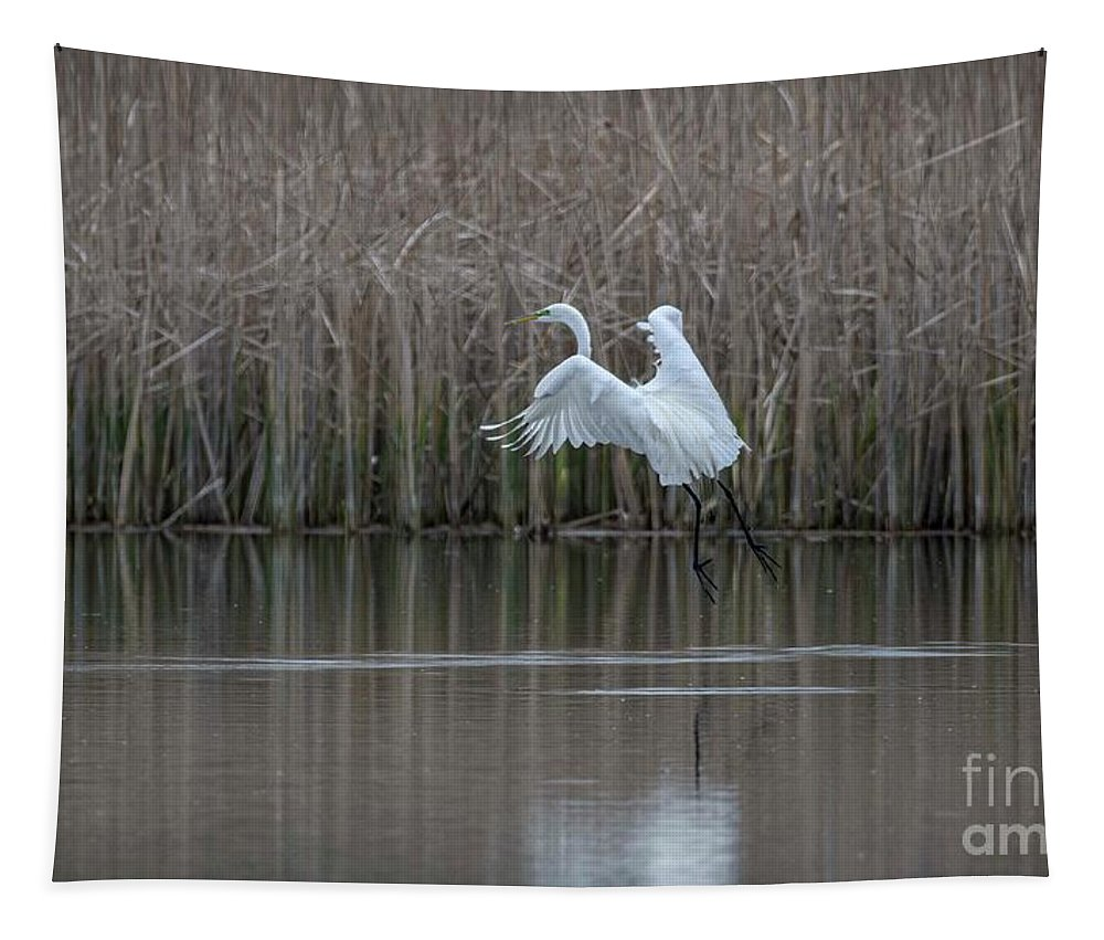 White Egret Tapestry featuring the photograph White Egret - 2 by David Bearden