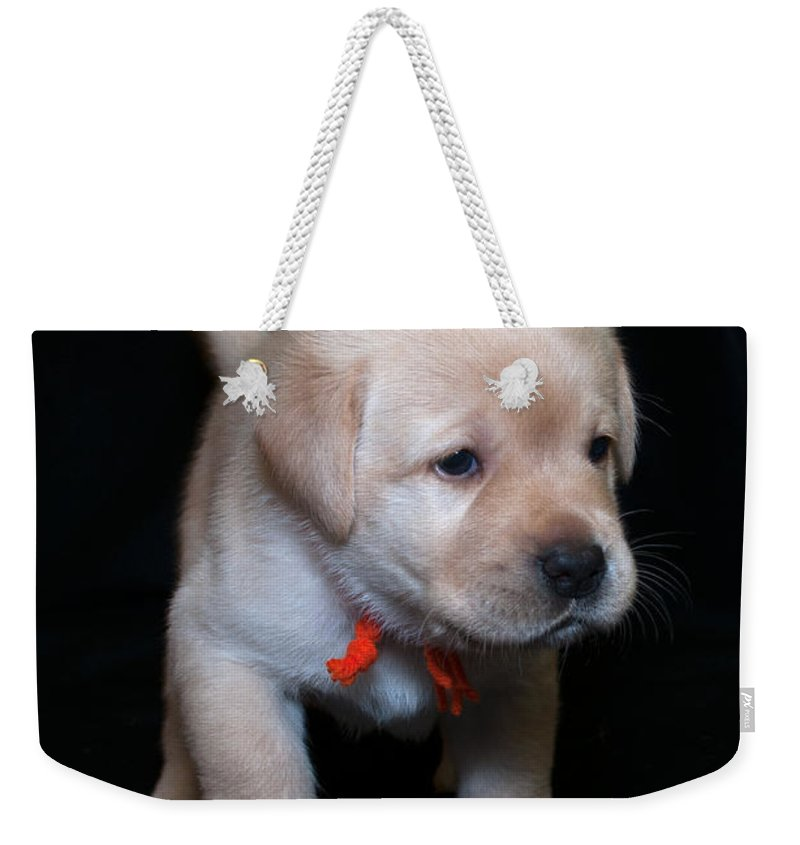Lab Weekender Tote Bag featuring the photograph 4 Week Old Lab Puppy by Photos By Cassandra