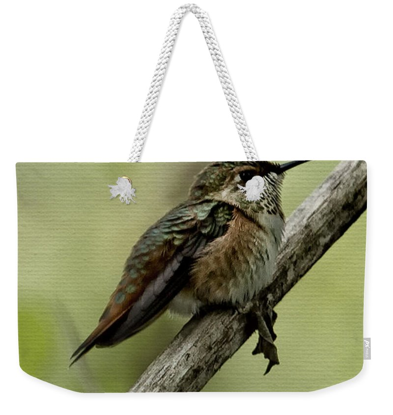 Hummingbird Weekender Tote Bag featuring the photograph A Little Tired Hummingbird by Belinda Greb