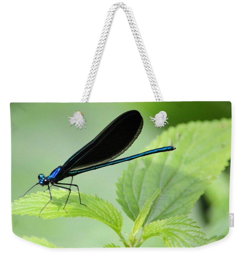 Damselfly Weekender Tote Bag featuring the photograph Black Winged Damselfly 7261 by Bonfire Photography