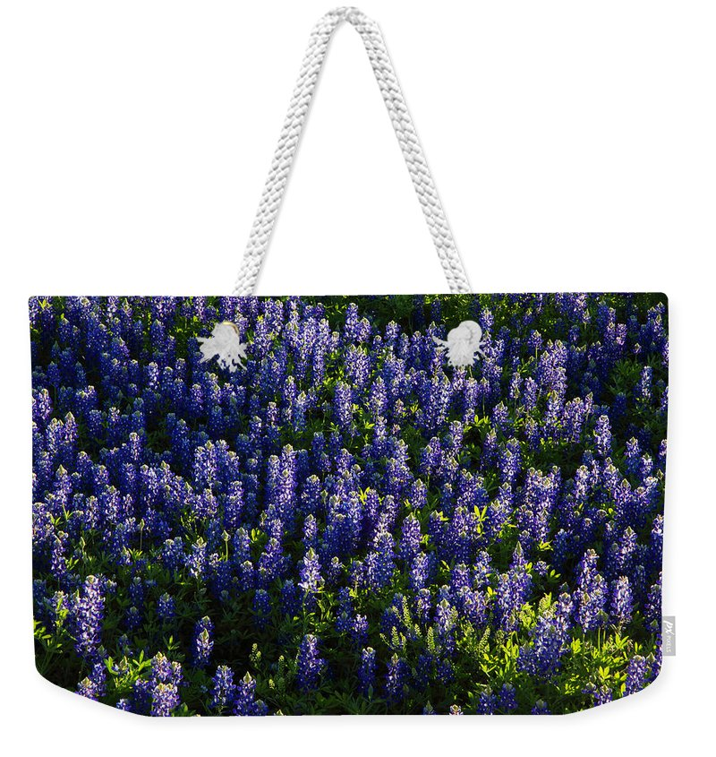 Weekender Tote Bag featuring the photograph Bluebonnets In The Limelight by Susan Rovira