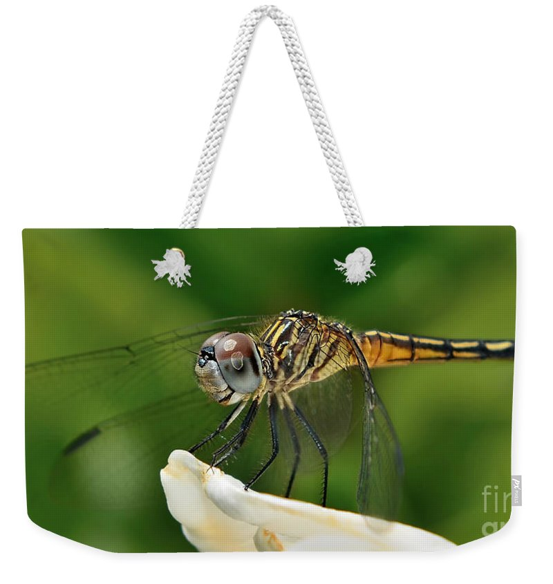 Dragonfly Art Weekender Tote Bag featuring the photograph Austrogomphus Dragonfly by Olga Hamilton