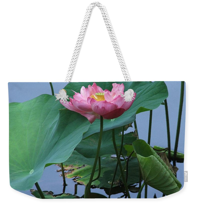 Lotus Weekender Tote Bag featuring the photograph Lotus Flower At Calloway by Robert Meanor