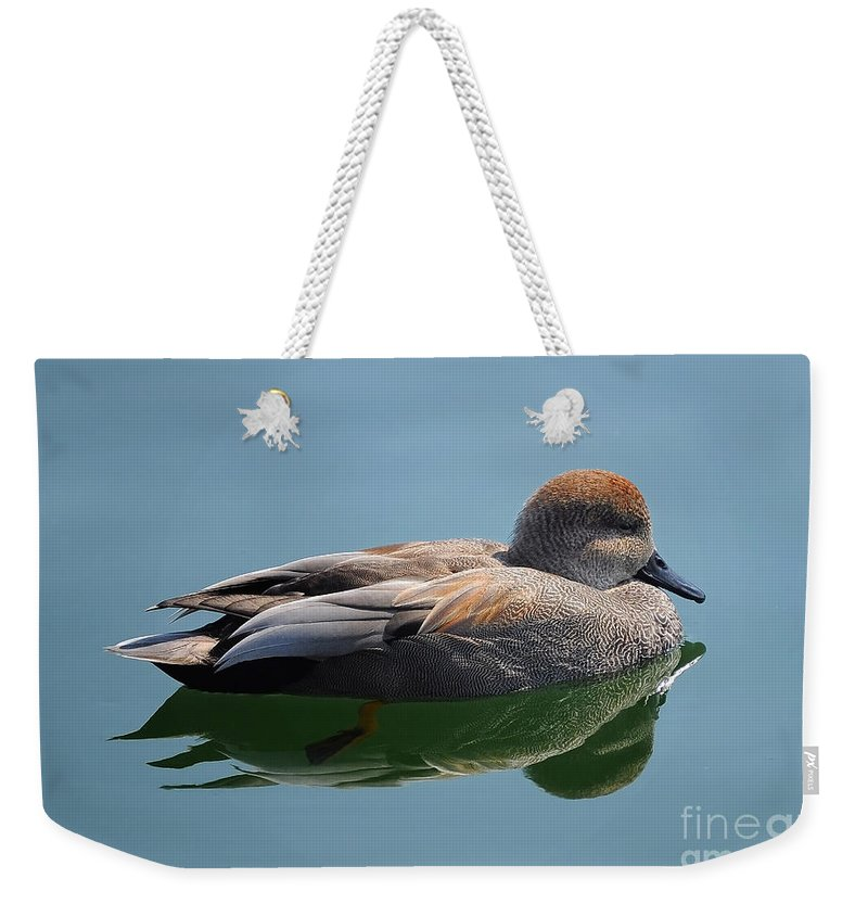 Duck Weekender Tote Bag featuring the photograph Male Gadwall Duck by Elaine Manley