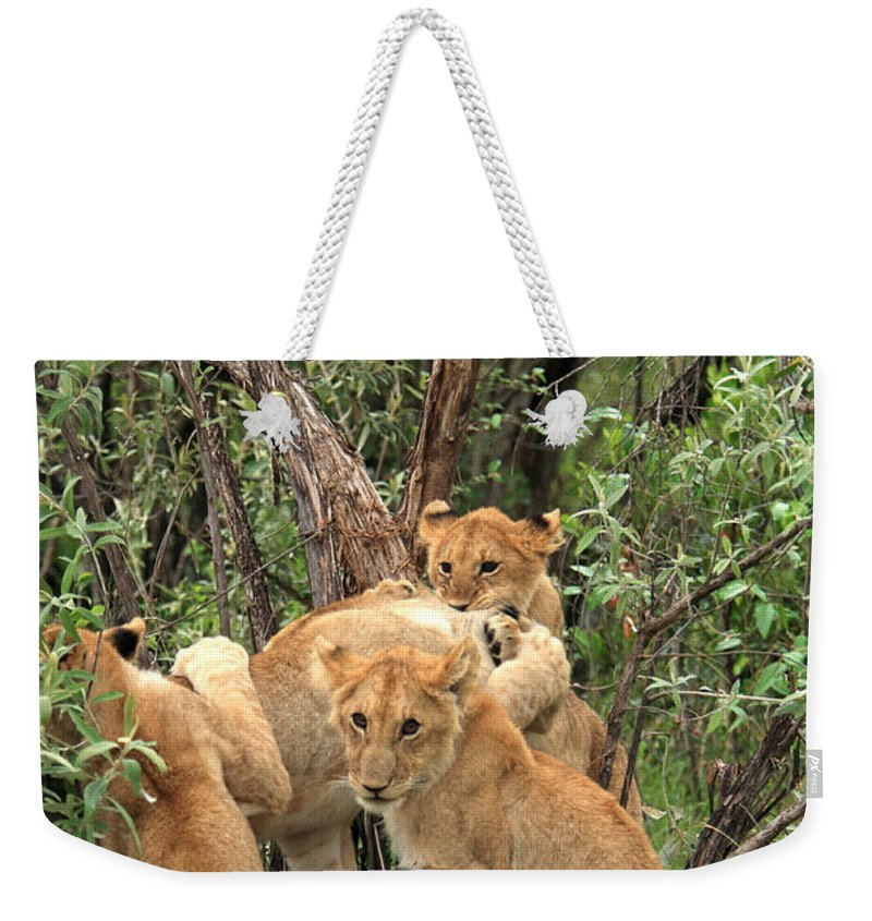Africa Weekender Tote Bag featuring the photograph Masai Mara Lion Cubs by Aidan Moran