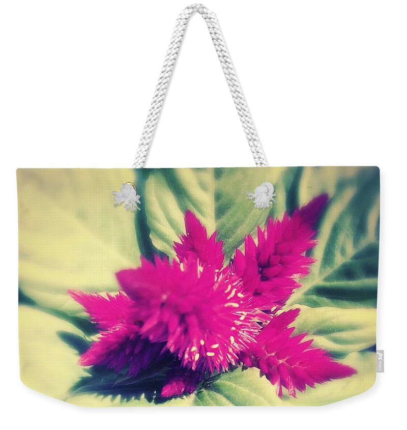 Celosia Weekender Tote Bag featuring the photograph A Blister And A Kiss . by Jennifer Kuehne