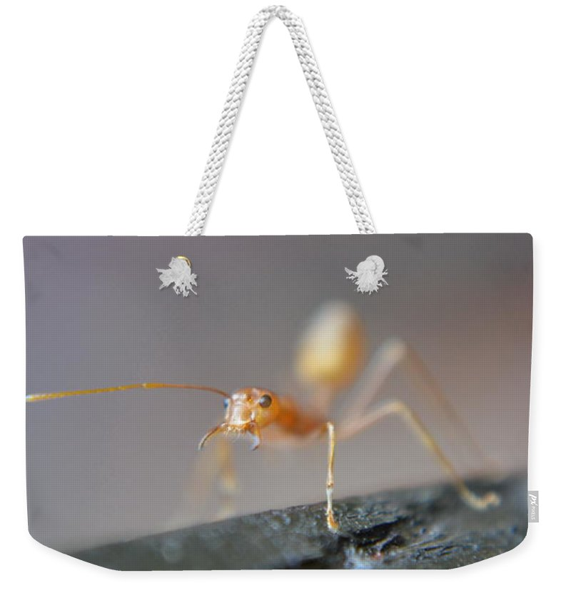 Michelle Meenawong Weekender Tote Bag featuring the photograph Red Ant by Michelle Meenawong