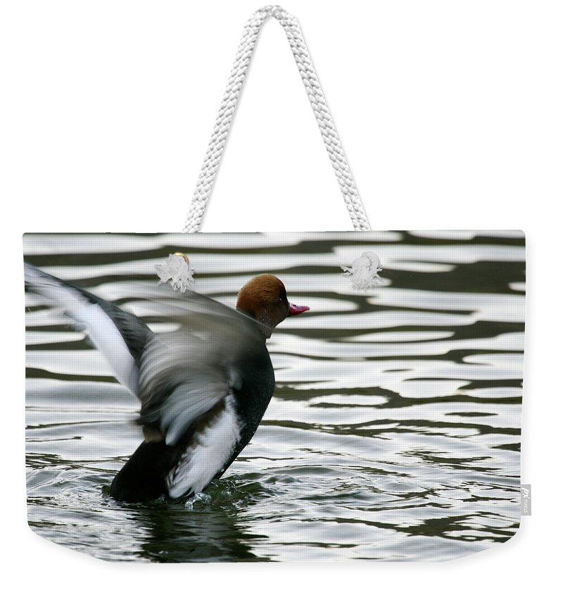 Wildlife Weekender Tote Bag featuring the photograph Red-crested Pochard -netta by David Santiago Garcia