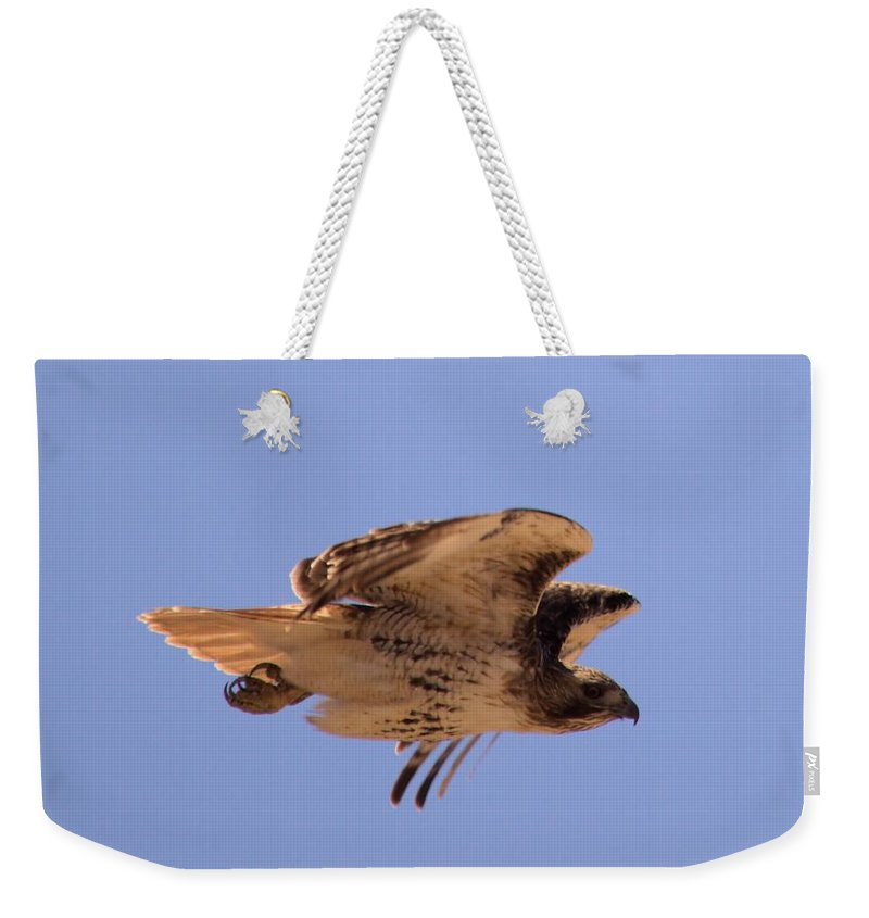 Hawk Weekender Tote Bag featuring the photograph Red Tail Hawk by Bonfire Photography