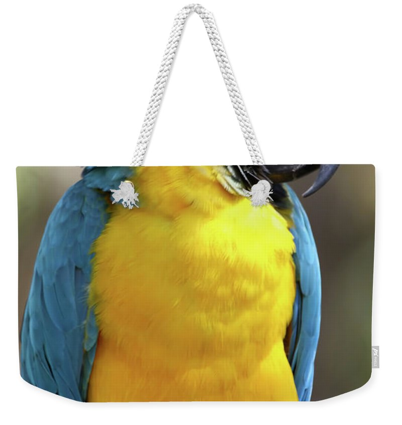 Macaw Weekender Tote Bag featuring the photograph The Big Guy by Deborah Benoit