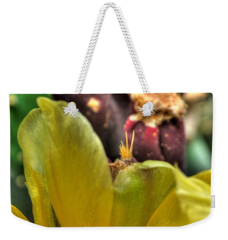 Buffalo Botanical Gardens Weekender Tote Bag featuring the photograph 001 For The Cactus Lover In You Buffalo Botanical Gardens Series by Michael Frank Jr