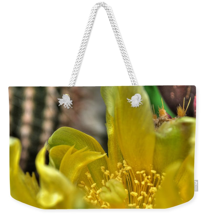 Buffalo Botanical Gardens Weekender Tote Bag featuring the photograph 003 For The Cactus Lover In You Buffalo Botanical Gardens Series by Michael Frank Jr
