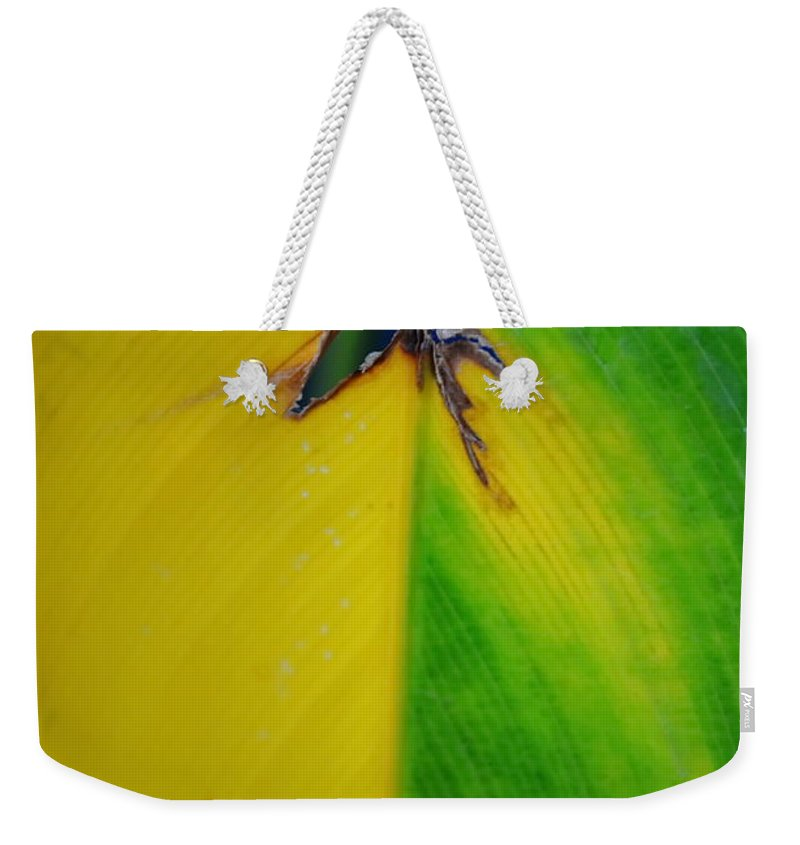 Michelle Meenawong Weekender Tote Bag featuring the photograph Hole by Michelle Meenawong