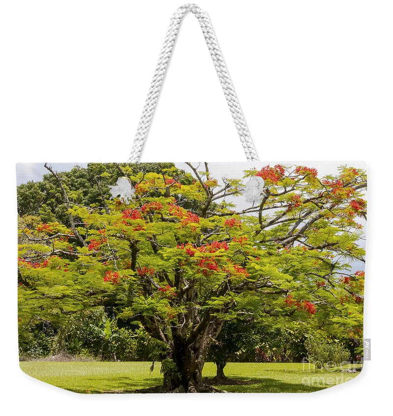 African Tulip Tree Tulips Maui Hawaii Nature Trees Weekender Tote Bag featuring the photograph African Tulip Tree by Bob Phillips