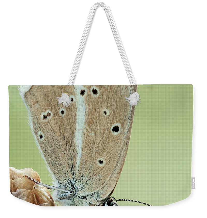 Image Digitally Manipullated Weekender Tote Bag featuring the photograph Agrodiaetus Sp 1.5x by Javier Torrent