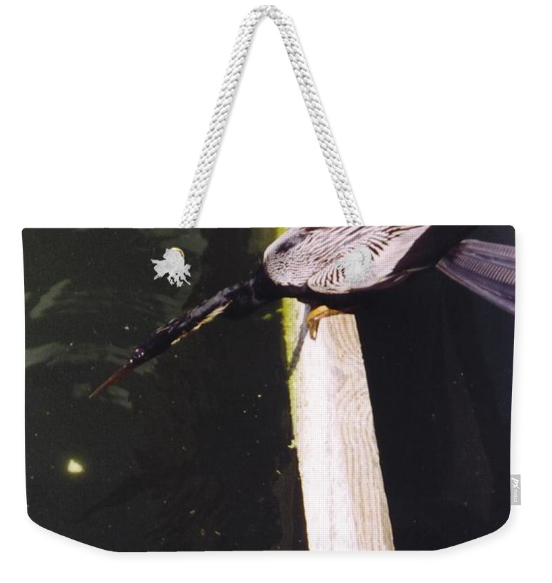 Lakes Park In Ft.myers Weekender Tote Bag featuring the photograph Anhinga Or Snake Bird by Robert Floyd