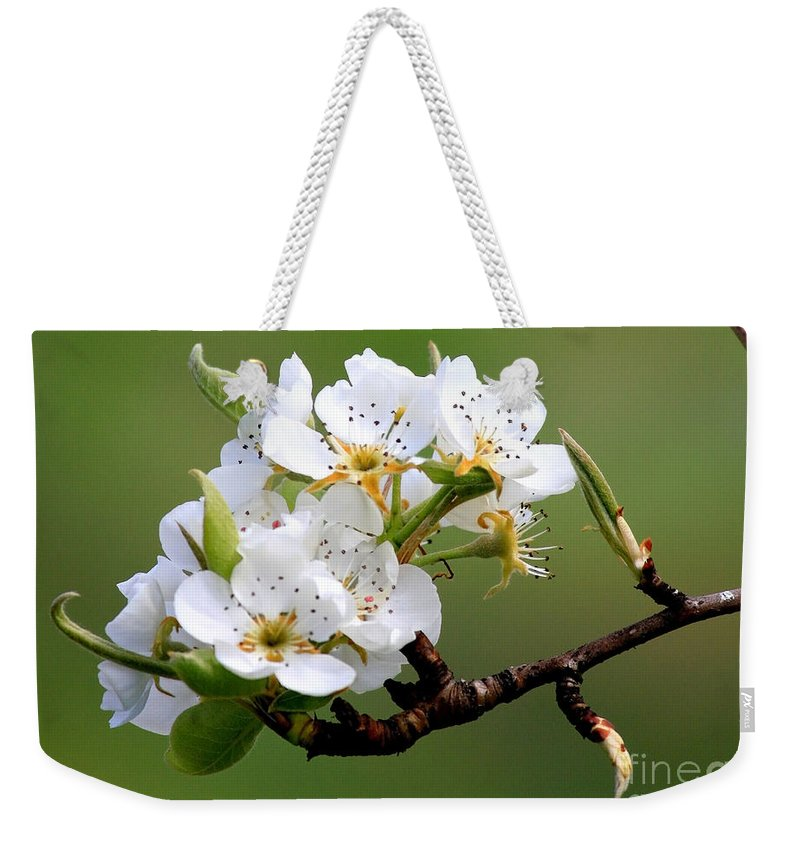Apple Blossoms Weekender Tote Bag featuring the photograph Apple Blossoms by Carol Groenen
