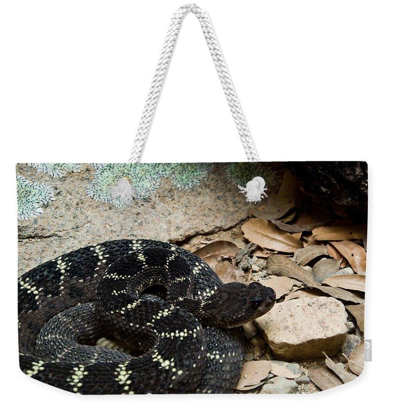 Reptile Weekender Tote Bag featuring the photograph Arizona Black Rattlesnake by Douglas Barnett