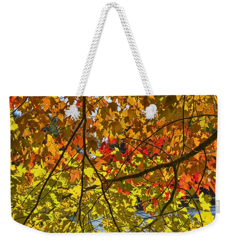 Art Weekender Tote Bag featuring the photograph Autumn Maple Leaves by Randall Nyhof