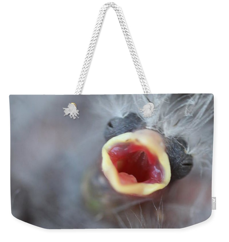 Chick Weekender Tote Bag featuring the photograph Baby Bird by Henrik Lehnerer