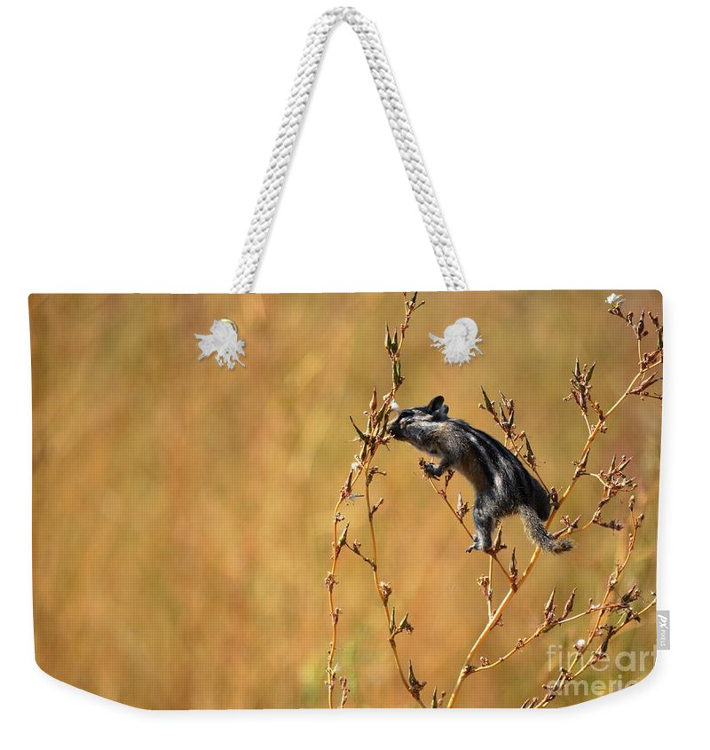 Chipmunk Weekender Tote Bag featuring the photograph Balancing Act by Deanna Cagle