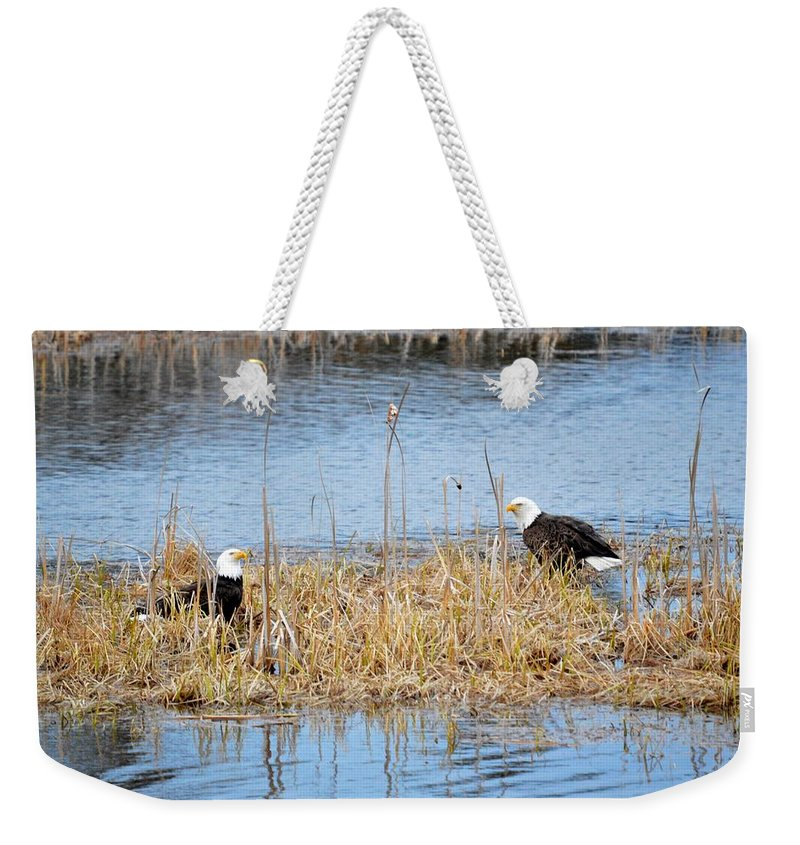 Bald Eagle Weekender Tote Bag featuring the photograph Bald Eagle Pair by Thomas Phillips